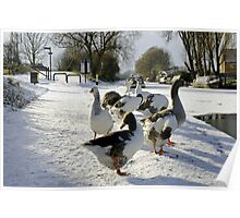 Geese at the Frozen Horninglow Basin Poster