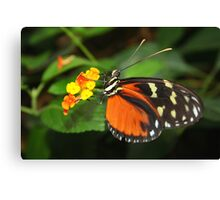 On Flower Hecale Longwing - Heliconius hecale zuleika Canvas Print