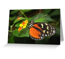 On Flower Hecale Longwing - Heliconius hecale zuleika Greeting Card