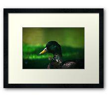 The Mallard Framed Print