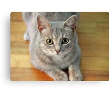 Hattie The Kitty Canvas Print