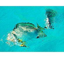 Underwater world Photographic Print