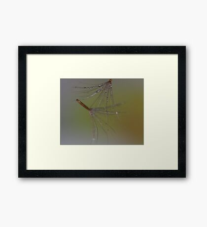 Falling With Grace Framed Print