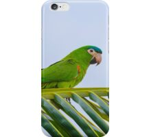 Parrot on a palm iPhone Case/Skin