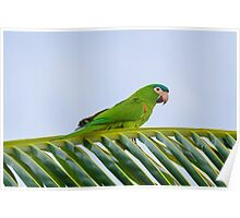Parrot on a palm Poster