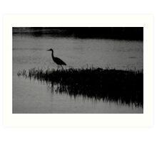 hunting heron Art Print