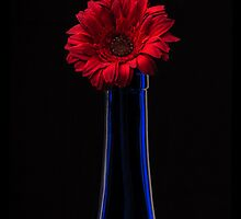 Blue & Red by Phil  Crean