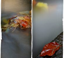 Autumn Water by rosiephoto