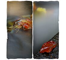 Autumn Water Photographic Print
