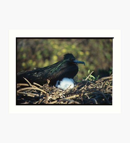Galapagos nesting Art Print