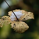 Winter Leaf After The Snow Fall by Rick Stoker