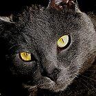 Johnny Cat by Loree McComb