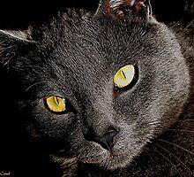Johnny Cat by © Loree McComb