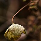 Leaf Holds Out Against The Winter Elements by Rick Stoker