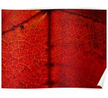 anatomy of leaf Poster
