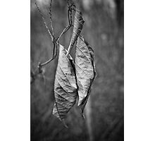 Leafs Photographic Print