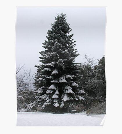 Winter Fir Tree Poster