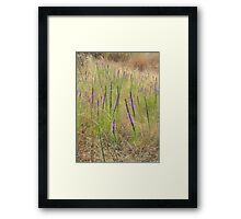 Surprise Patch of Prairie Blazing Star Framed Print