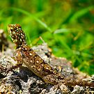 Colourful lizard in Nairobi Safari Park, KENYA  by Bruno Beach