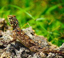 Colourful lizard in Nairobi Safari Park, KENYA  by Atanas Bozhikov NASKO