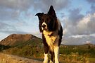 Evening walk with  Indy by Michael Haslam