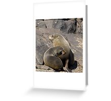 Funky Brown Fur Seal Greeting Card