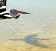 Pelican Express Sticker