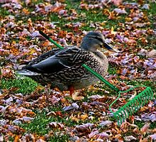 ITS THAT TIME OF YEAR FALLING COLOURFUL LEAVES= AUTUMN-DUCK RAKING LEAVES--A DUCKS WORK IS NEVER DONE-QUACK-QUACK->>PILLOWS-TOTE BAG-BOOK-JOURNAL-SCARF APPAREL - ECT by ✿✿ Bonita ✿✿ ђєℓℓσ