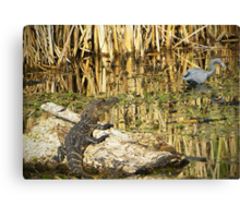 Young Gator Canvas Print