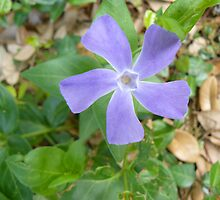 Purple Star by Kimberly Darby