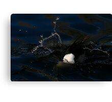 Ducking n Diving Canvas Print