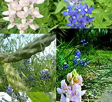 Blue Bonnet Collage by Kimberly Darby