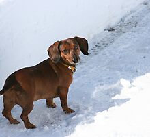 SNOWY ADVENCERE by Heidi Mooney-Hill