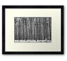Black & White Pine Framed Print