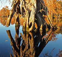 More cypress reflections by Michele Conner
