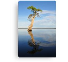 Solitary Cypress Canvas Print