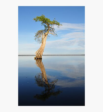 Solitary Cypress Photographic Print