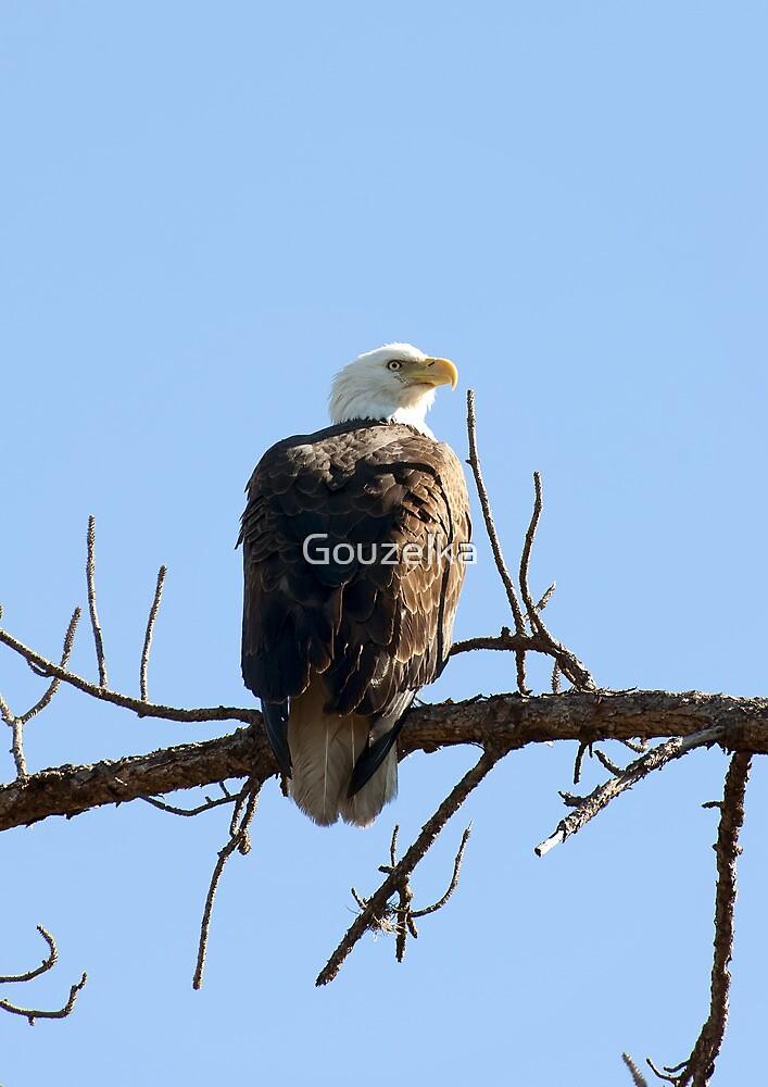 Bald Eagle by Gouzelka