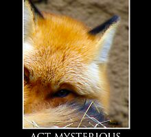 ZooTips: Act Mysterious  by Angie Dixon