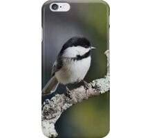 Black-capped chickadee perched on a branch iPhone Case/Skin