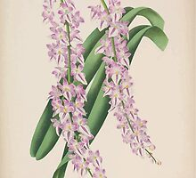 Iconagraphy of Orchids Iconographie des Orchidées Jean Jules Linden V15 1899 0170 by wetdryvac