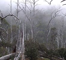 fog in the bush by Cradle Mt by gaylene