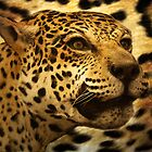 Lots Of Leopard Spots by CarolM