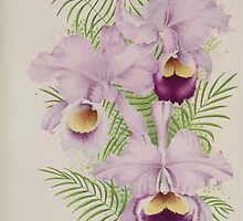 Iconagraphy of Orchids Iconographie des Orchidées Jean Jules Linden V15 1899 0030 by wetdryvac