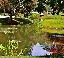 Reflections in the Garden by Scott Mitchell