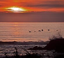 Flight Of The Birds During Sunset by IMAGETAKERS