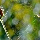 On the Web by Emilie Trammell