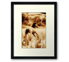 Bachelor: Collaboration with George Lenz Framed Print