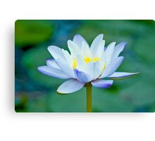 True Blue - waterlilly Canvas Print