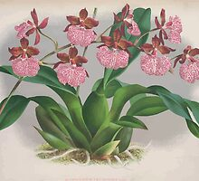 Iconagraphy of Orchids Iconographie des Orchidées Jean Jules Linden V3 1887 0114 by wetdryvac